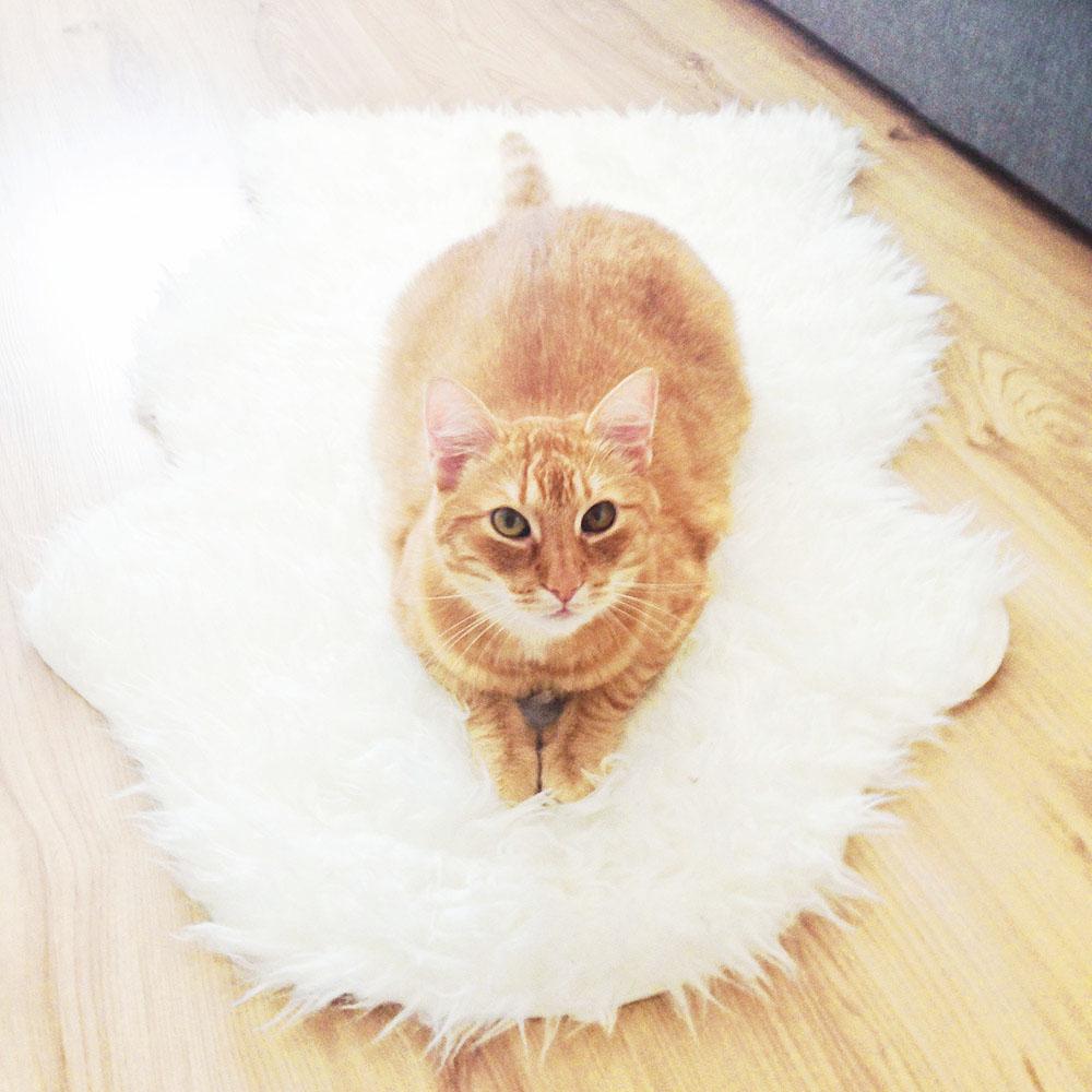 Kot na dywaniku.
