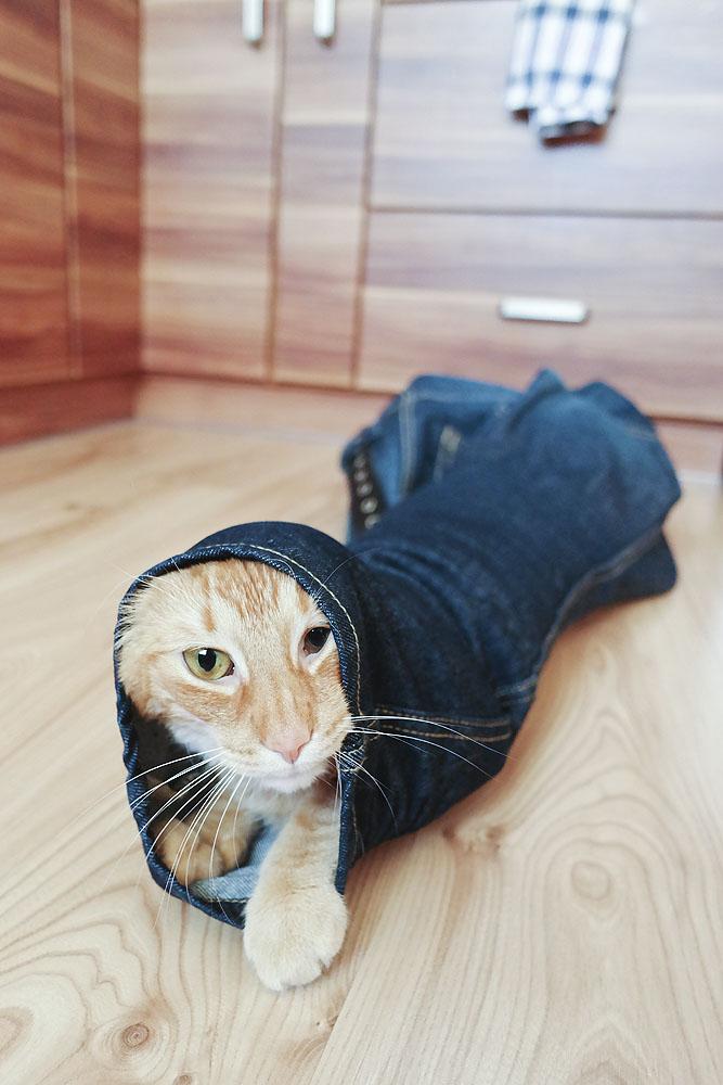 kot w spodniach