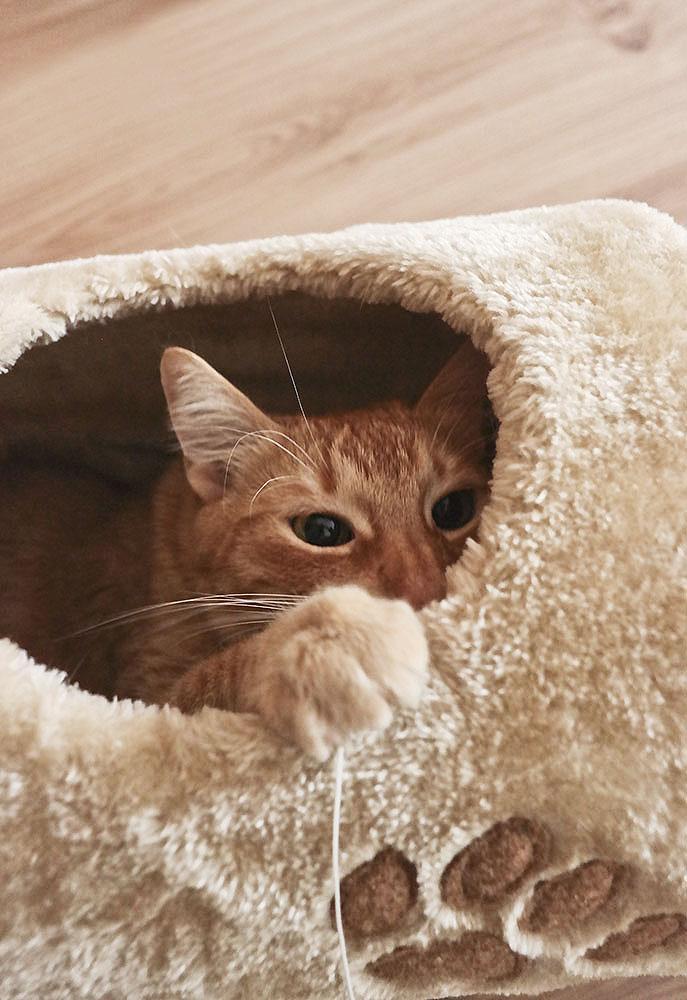 Tunel dla kota.