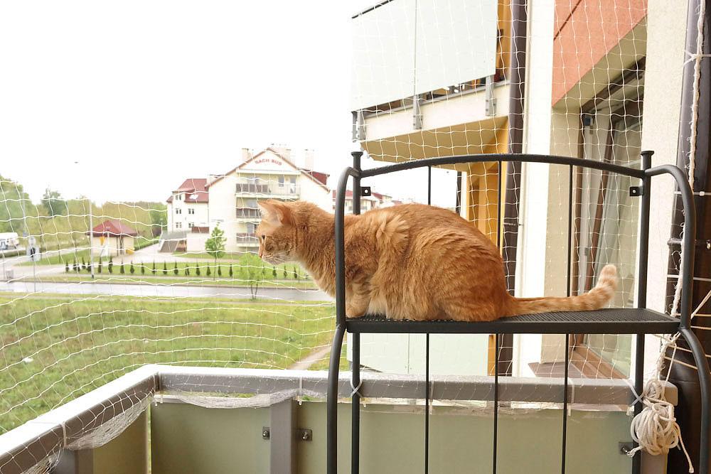 zabezpieczenie balkonu dla kota